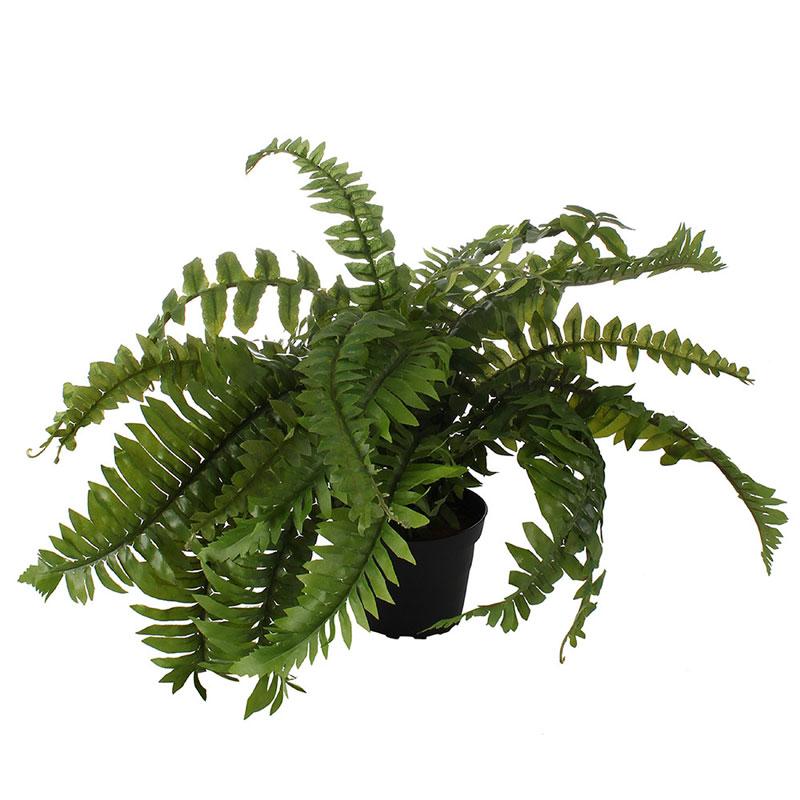 indoor plants - bringing the outdoors in
