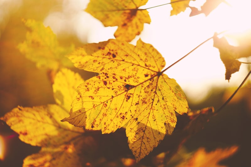 Autumn Leaf With Low Sunlight - Make the most of your Awning this Autumn - Awningsouth Blog