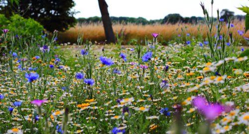 Wild Flowers - Garden Trends 2020 - Awningsouth Blog